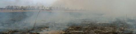Grassland fire