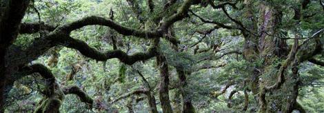 mossyforest