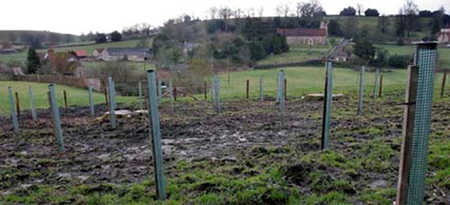 200 Young oaks replaced TREE on the Longleat estate, one of each of Darwin's 200 anniversary
