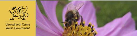 welsh pollinator action plan